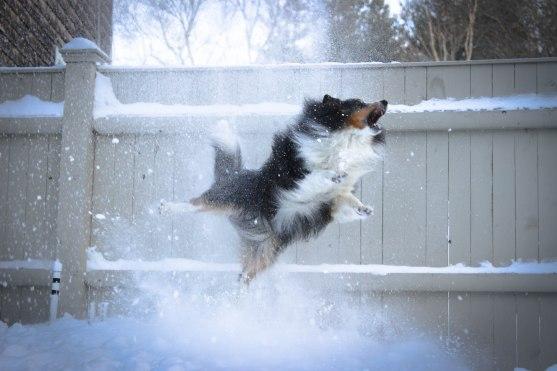 snowsplosion (1 of 1)