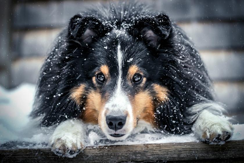head down snow