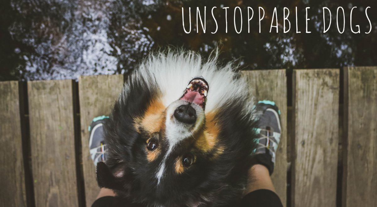 Unstoppable Dogs
